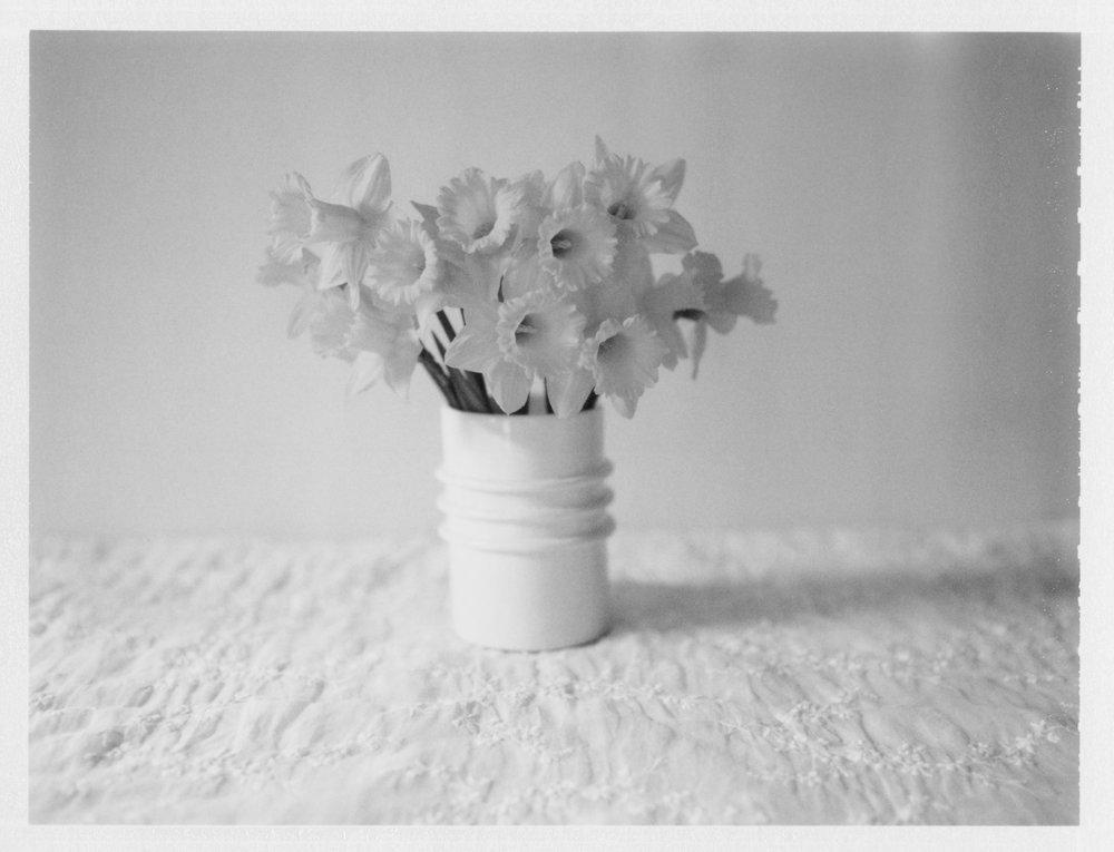 """Daffodils. 2014. Archival Pigment Print. 6"""" x 8"""""""