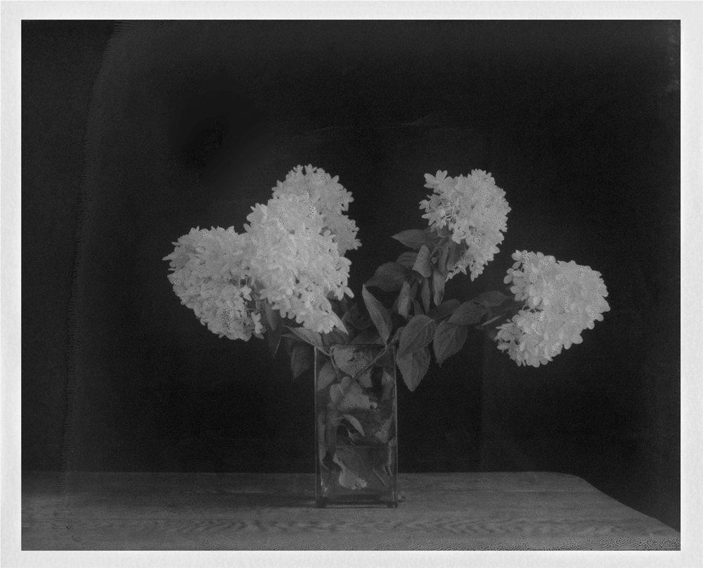 "Hydrangea. 2015. Archival Pigment Print. 7"" x 9"""