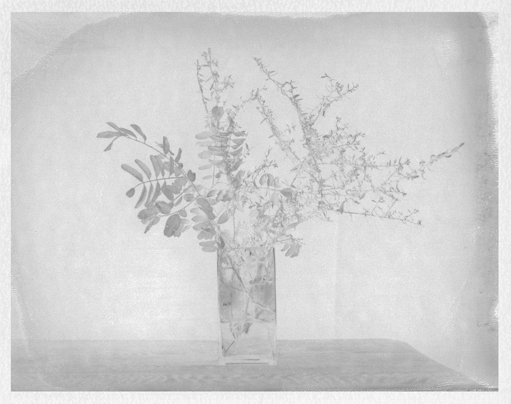 "Still life with Forsythia. 2016. Archival Pigment Print. 7"" x 9"""