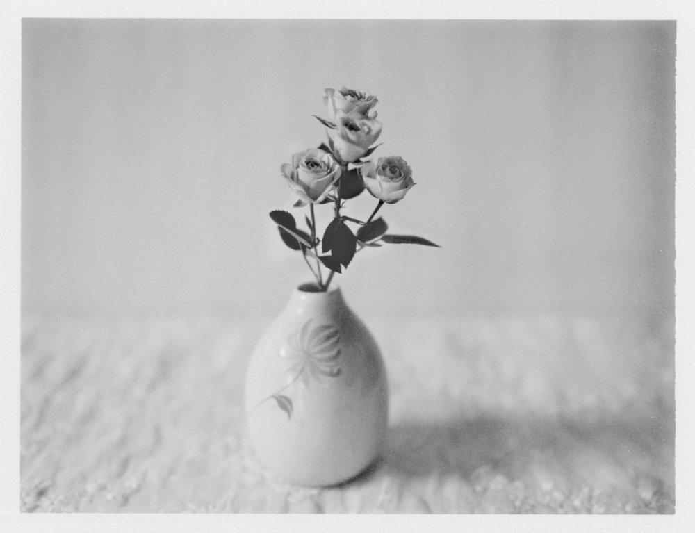 "Roses. 2015. Archival Pigment Print. 7"" x 9"""