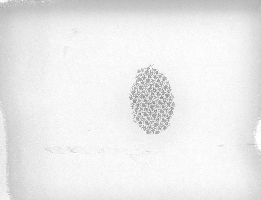 "Lace Series. 2016. Archival Pigment Print. 7"" x 9"""