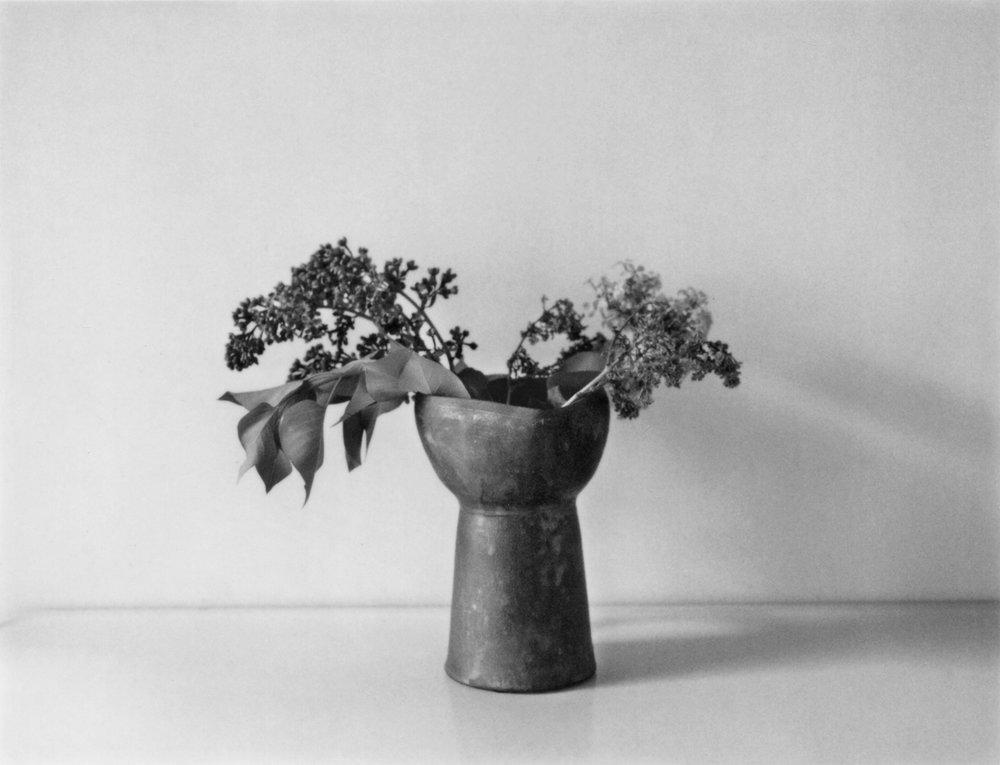 Lilacs for John Ashbury