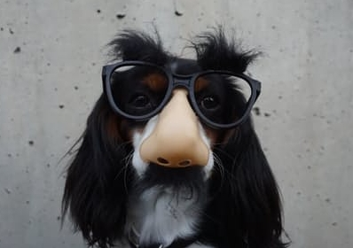 dog glasses.jpg