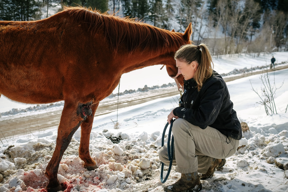 Dr. Hoke examines an injured horse along the side of a rural road.