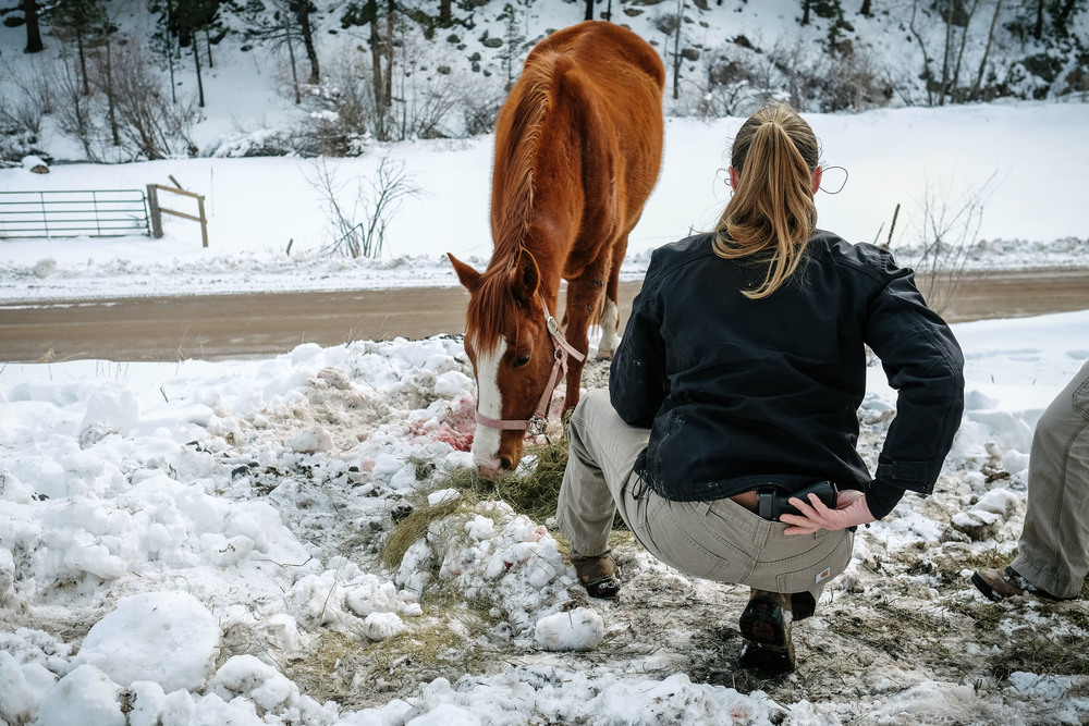 "Dr. Hoke prepares to put down a badly injured horse with a hand gun. ""I do believe, if done right, that is is a humane way of ending an animal's suffering."""