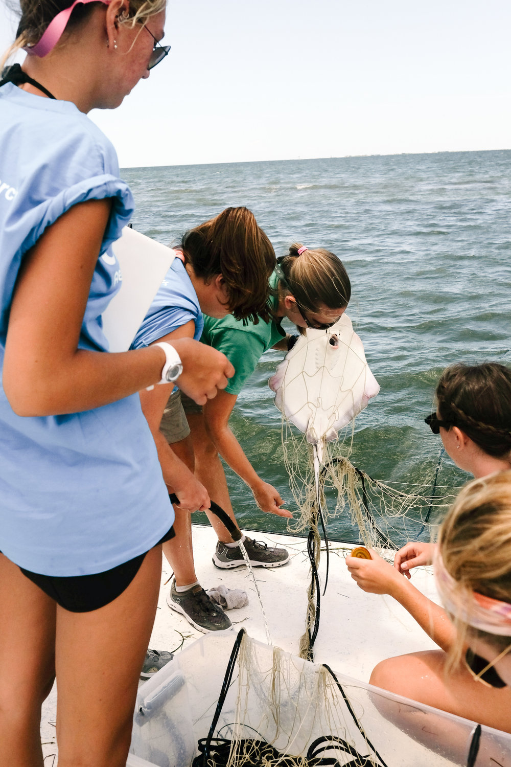 Moriah Moore helps her students carefully untangle a southern stingray from their net.