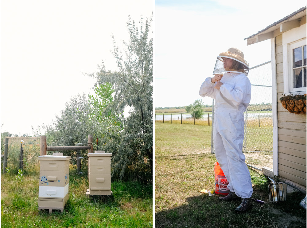 Bees-0.jpg