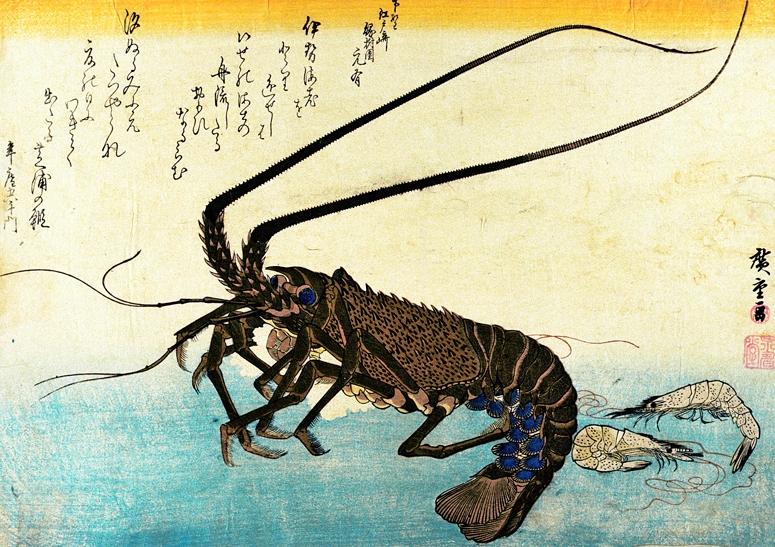 Crustacean 1