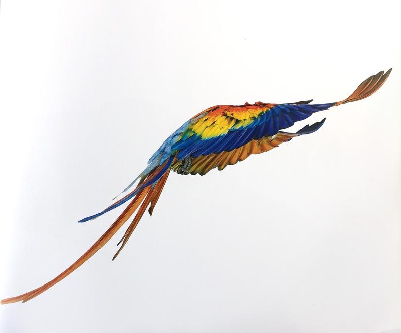 Macaw 3