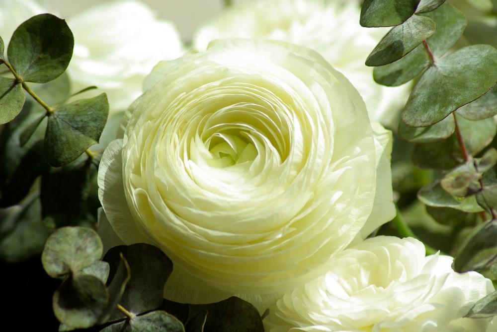 flowers-buttercups-flowering-petals.jpg