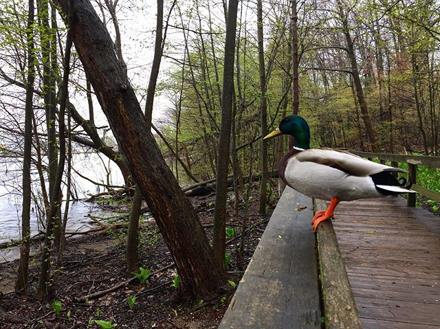 unsolicited duck pic.