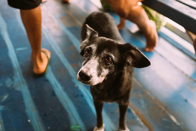 Tripulante canino