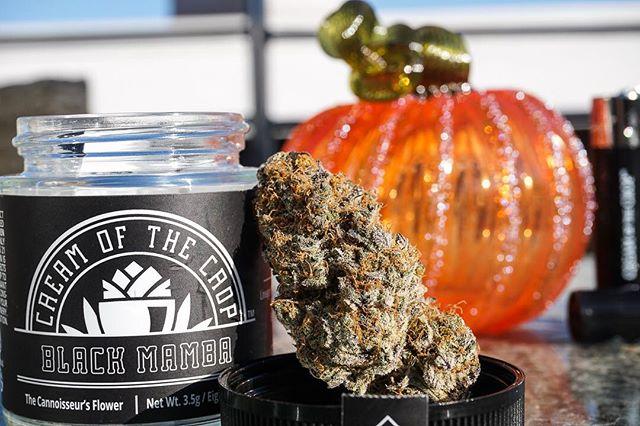 Potent but not poisonous ☠️ Black Mamba bred by @exoticgenetix_mike ⚫️🐍🎃 _____________________________________________________________ #CreamOfTheCrop #Fire #MMJ #HighTimes  #Indica #CannabisCommunity #Sativa #Indoor #California #THC #Frost #SmokeWeedEveryDay #Terps #WhiteAshGang #PlayingWithFire #Exotics #AllGasNoBrakes #LosAngeles #PurpleKush #FrostedFlakes #BetterThanGood #TheCube #Halloween #BlackMamba #MintChocolateChip #Spooky