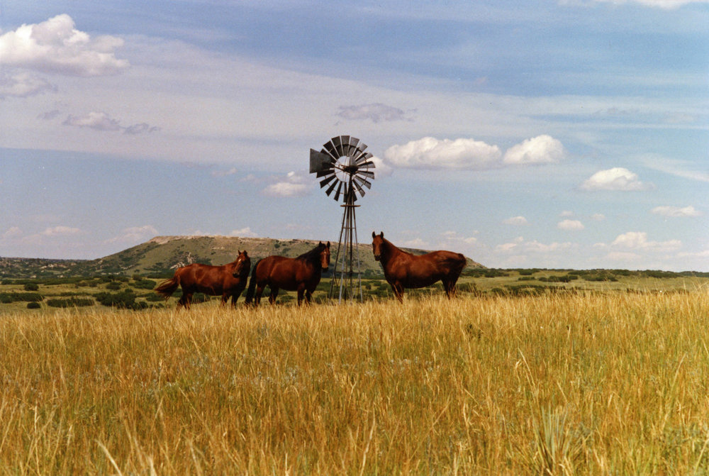 Canbridge_Morgans_and_windmill_Bell_Mountain_Ranch.jpg