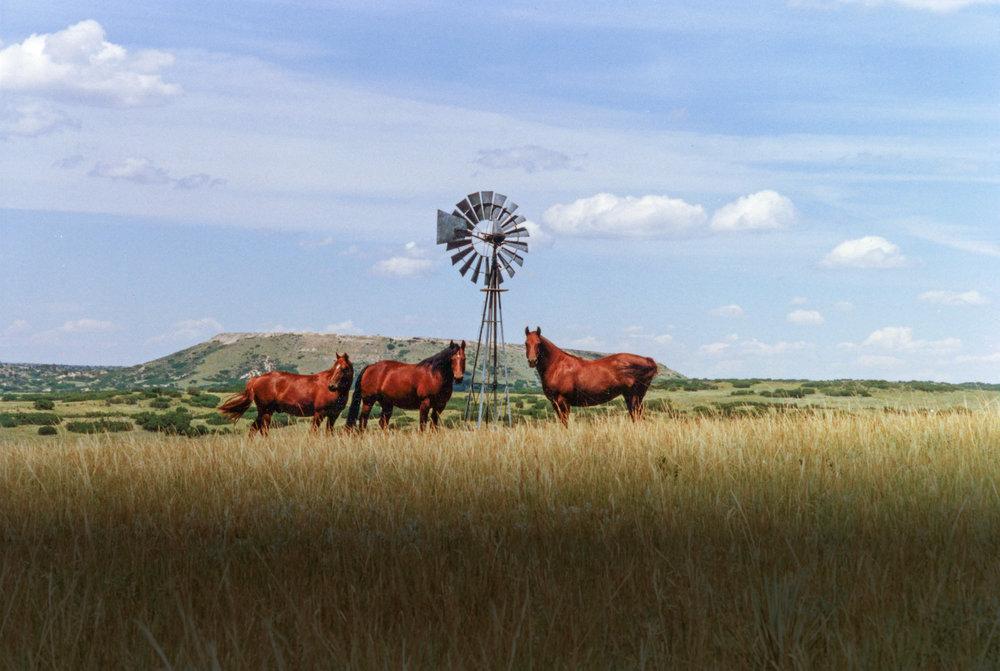 horse background2.jpg