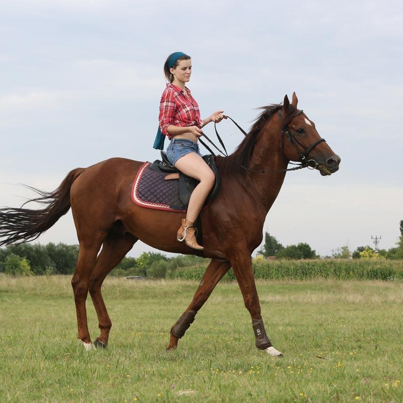 shorts-horse.jpg