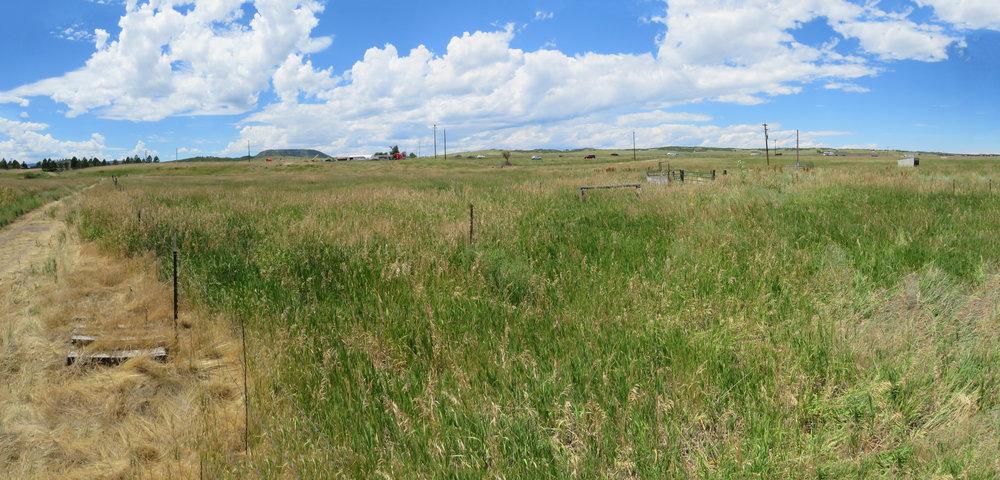 Pasture_1.jpg