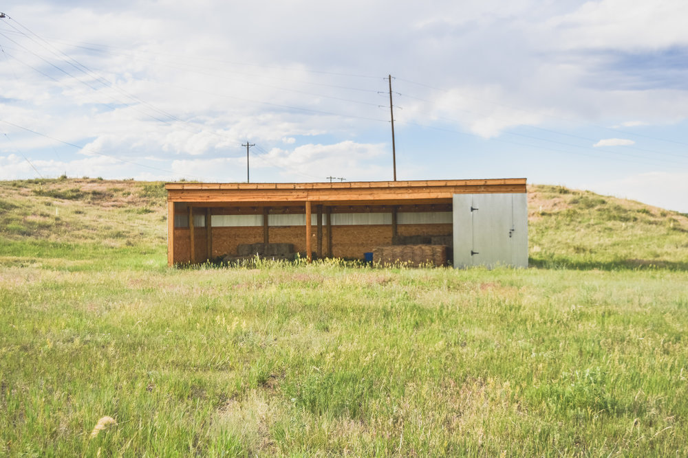 -pasture-1-3.jpg