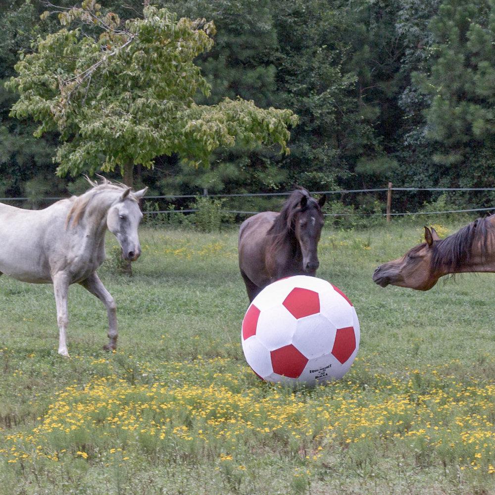 horse-socccer_web.jpg