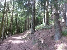 strassen forest.jpg