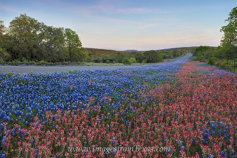 Wildflowers-of-Gillispie-County.jpg