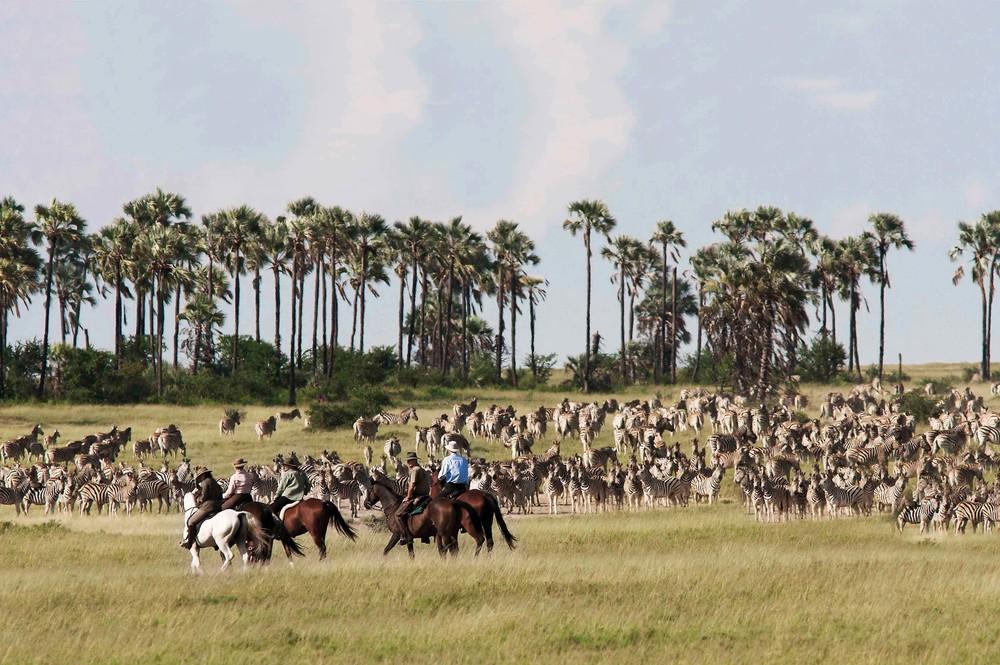 Horse_Safaris_3.jpg