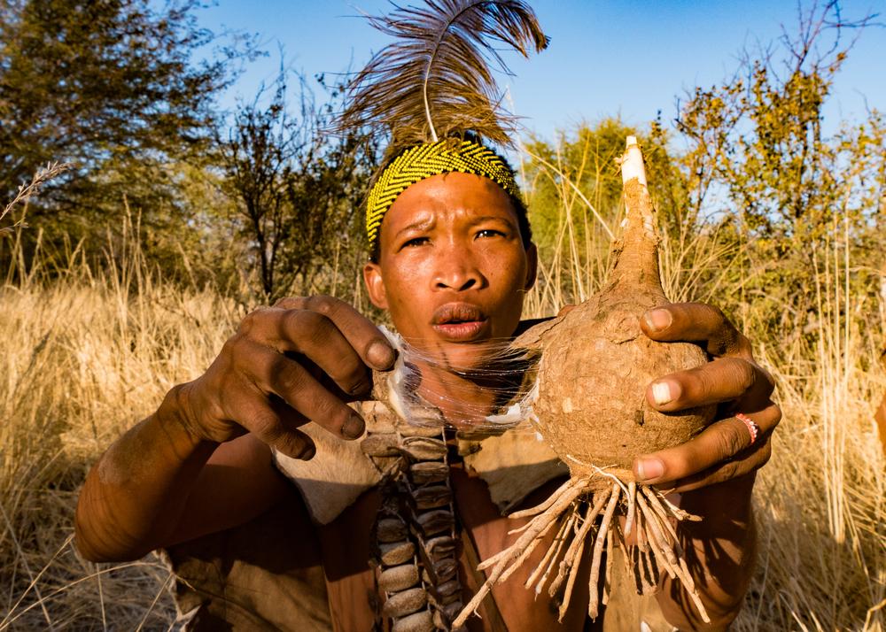 San-bushman digging up a root