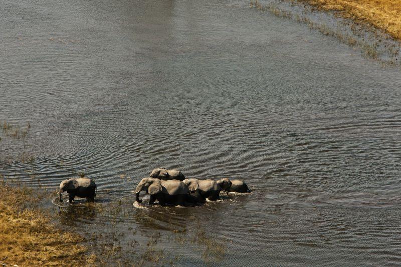 _Copyright_Beverly_Joubert_SelindaAdventureTrail_Landscape_Botswana_4336.jpg