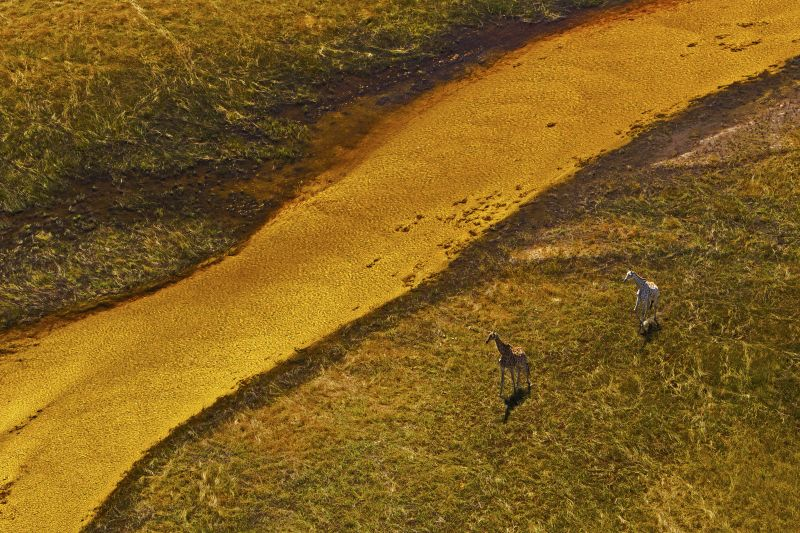 _Copyright_Beverly_Joubert_SelindaAdventureTrail_Landscape_Botswana_4338.jpg