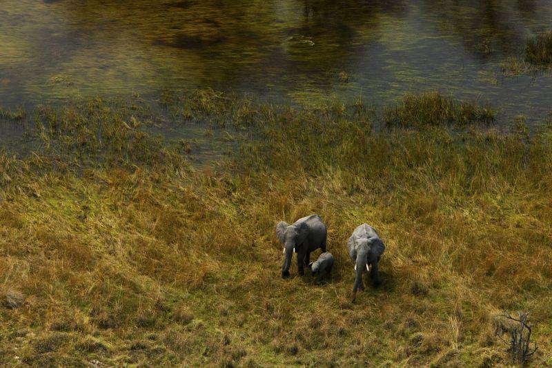 _Copyright_Beverly_Joubert_SelindaAdventureTrail_Landscape_Botswana_4341.jpg