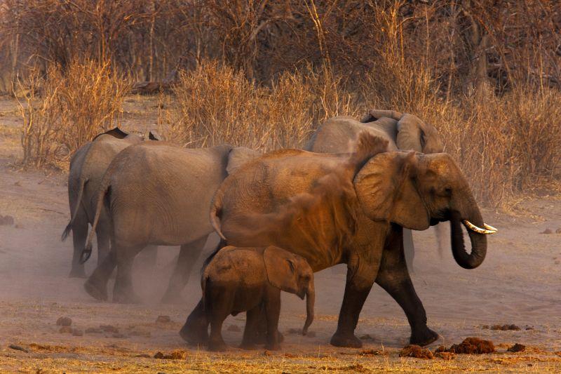 _Copyright_Beverly_Joubert_Zarafa_Wildlife_Botswana_4886.jpg