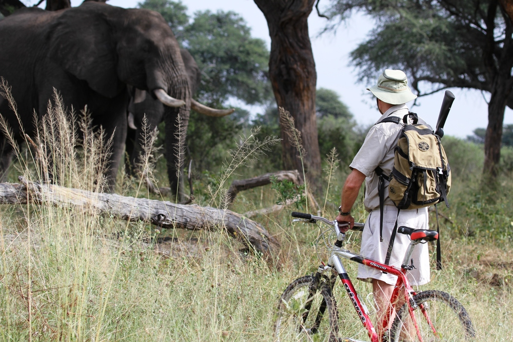 149_-_imvelo_safari_lodges_-_experimenting_with_mountain_bikes_on_elephant_paths_in_southern_hwange.jpg