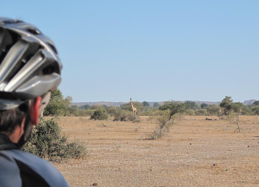 CycleMashatu Bike Safari 5.JPG