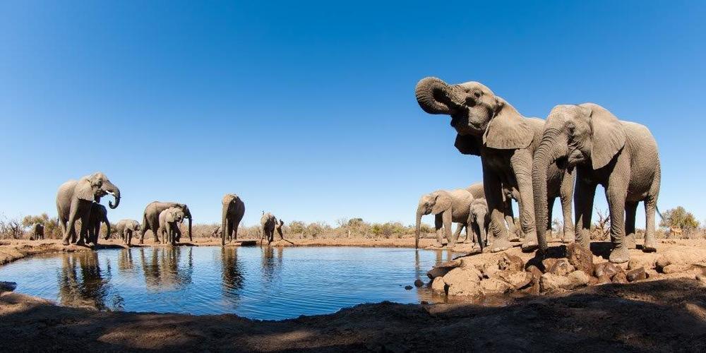 Elephants-at-the-Waterhole.jpg
