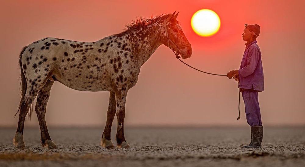 horse-groom.jpg