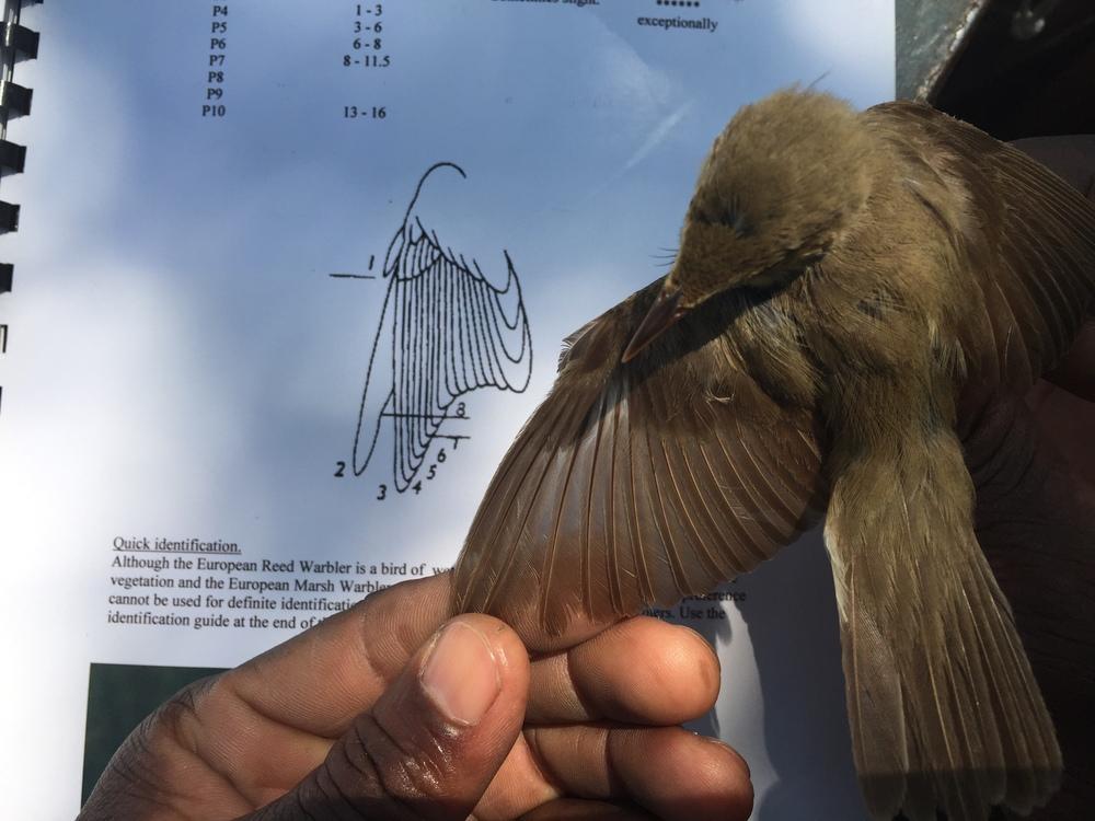 Specialist birding skills.JPG
