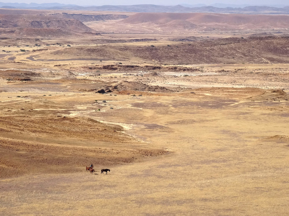Horses in landscape.jpg