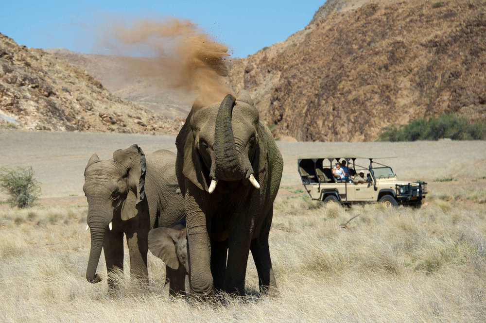 Desert Adapted Elephant on Drive from Doro !Nawas.jpg
