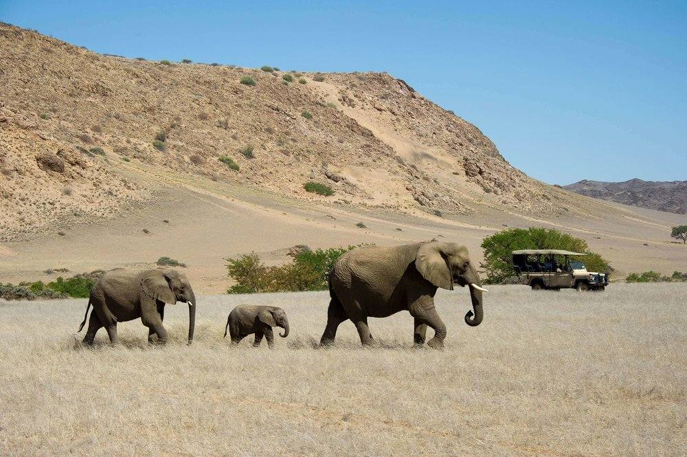Desert Adapted Elephant on Game Drive From Doro !Nawas.jpg