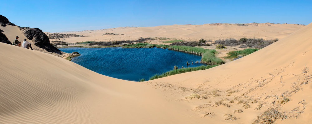Desert Oasis Near Hoanib Skeleton Coast Camp.jpg
