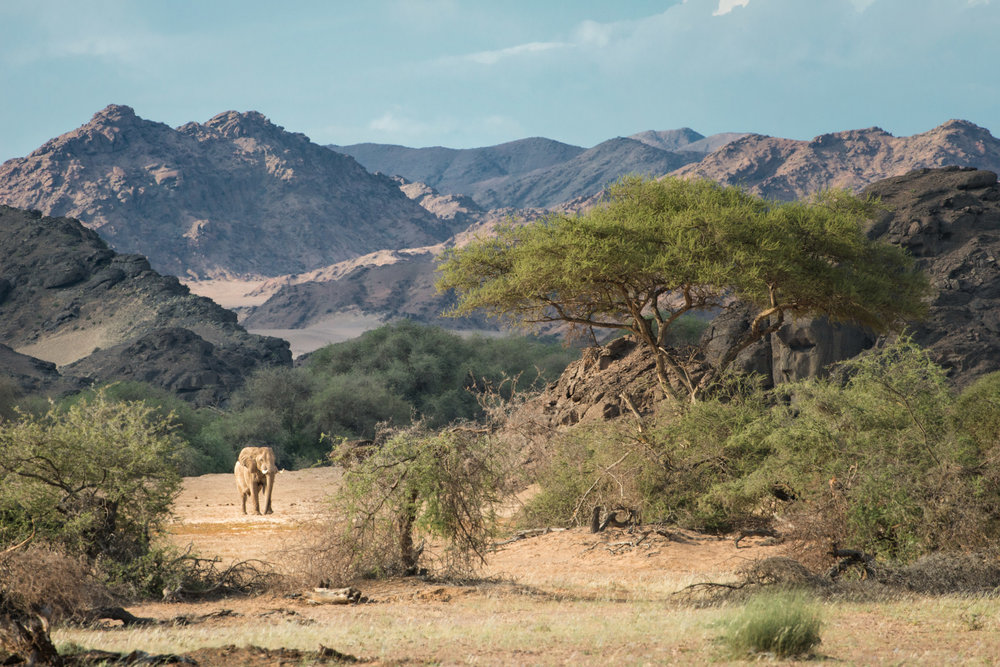 Hoanib Landscape with Desert Adapted Elephant.jpg