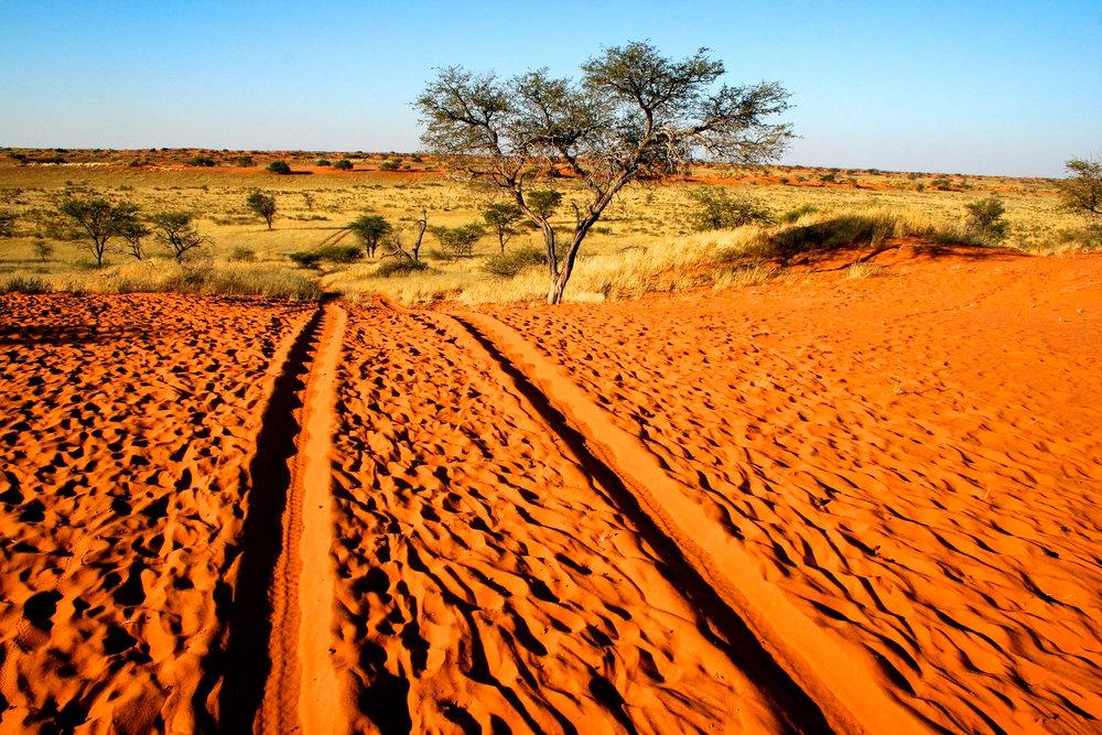 Kalahari Landscape (1).jpg