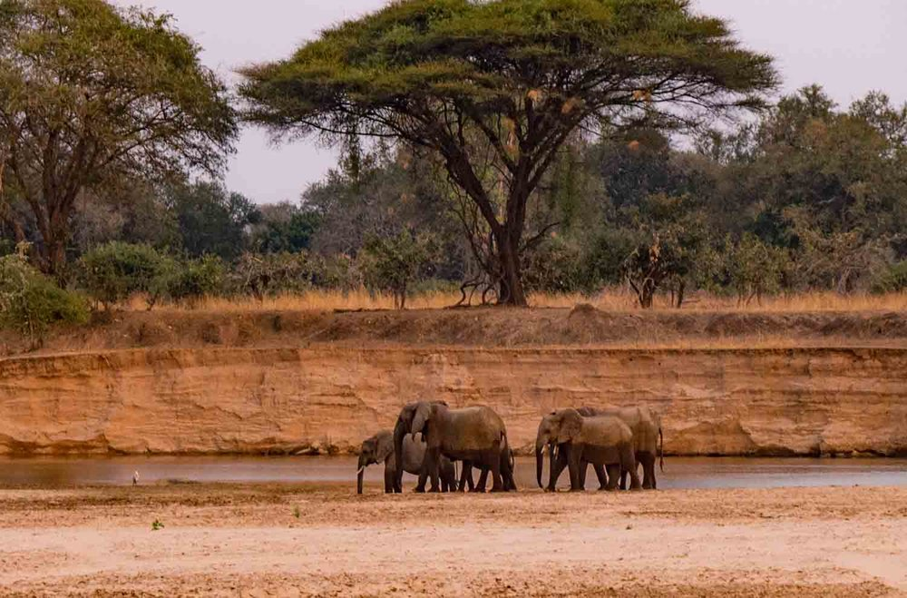"""Elephants and acacias - can it get any more """"Africa"""""""