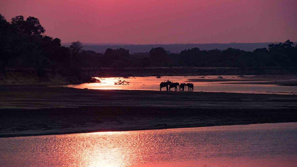 Elephant sunsets...