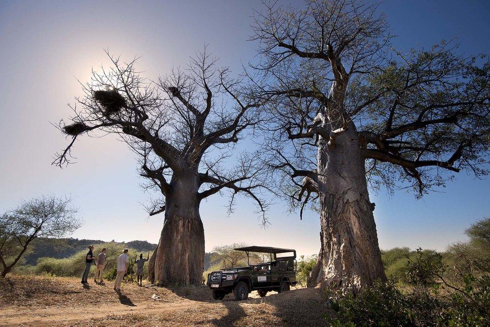 Pafuri_065_baobab_trees_drive.jpg