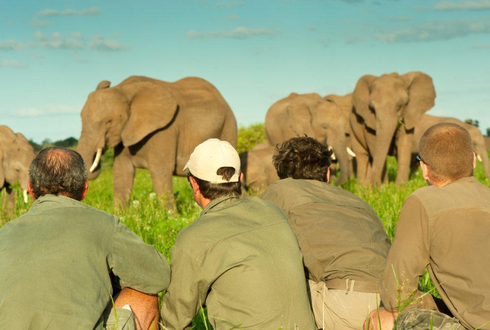 ET-Elephant-on-foot-1-of-1.jpg