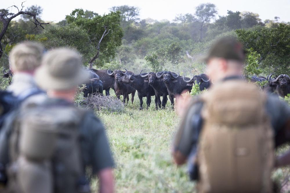 Buschwanderung Südafrika