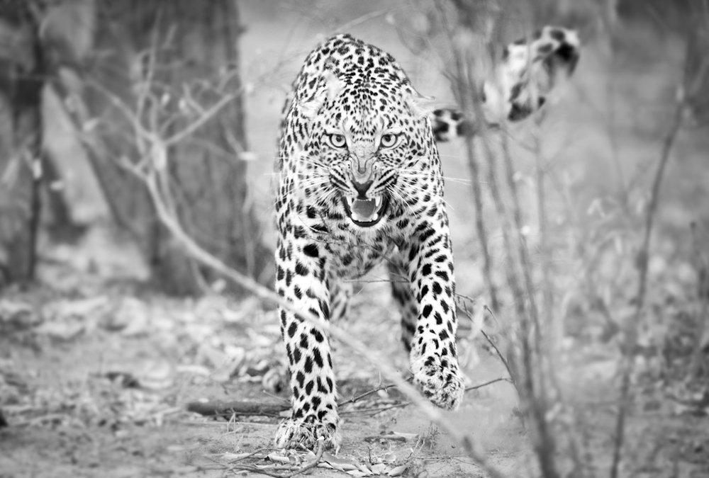 Africa Unlocked Wildlife (1 of 1)-3.jpg