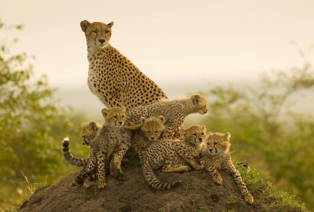 Photo Credit : Africa Unlocked