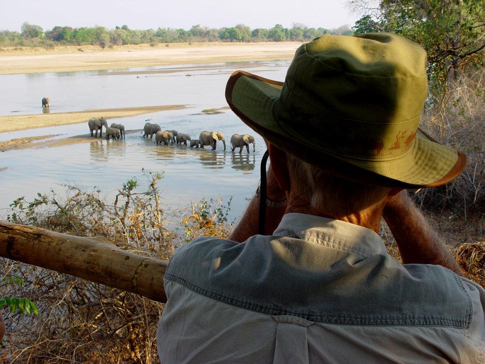 elephant_hide_3.jpg